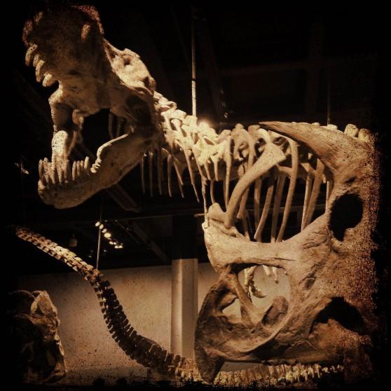 Ett drakskelett från Riksmuseum
