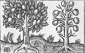 Medeltida träsnitt på magiska äpplen